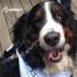 Promoción Uber Día Mundial de Llevar la Mascota al Trabajo: solicita un Uber y adopta un cachorrito!