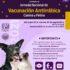 Jornada Nacional de Vacunación Antirrábica 2021: vacunas Gratis para perros y gatos